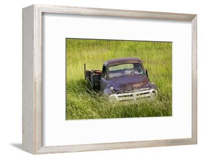 Washington State, Palouse. Vintage Studebaker Pickup Truck in Field