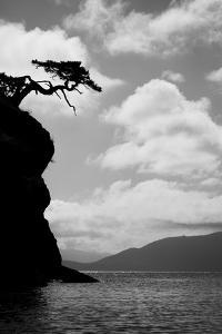 Washington State, San Juan Islands. Weathered Fir Tree Silhouette on Matia Island by Jaynes Gallery