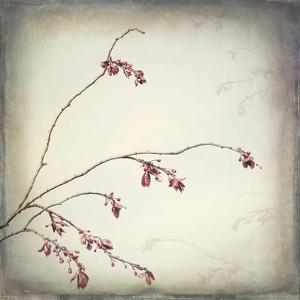 Washington State, Seabeck. Plum Tree Branch with Spring Buds by Jaynes Gallery