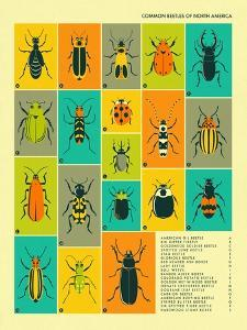 Common Beetles of North America by Jazzberry Blue