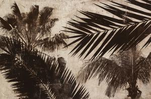 Palms 2 by JB Hall