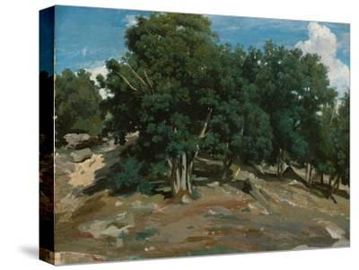Fontainebleau: Oak Trees at Bas-Bréau, 1832-3