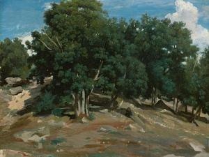 Fontainebleau: Oak Trees at Bas-Bréau, 1832-3 by Jean-Baptiste-Camille Corot