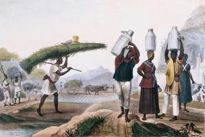 Milk and Capin Plant Sellers by Jean Baptiste Debret