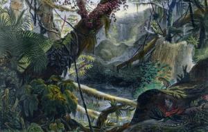 Valley in the Serra Do Mar, Voyage Pittoresque et Historique Au Bresil by Debret by Jean Baptiste Debret
