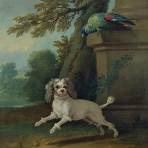 Zaza, the Dog, C.1730 by Jean-Baptiste Oudry