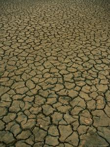 Dried and Cracked Earth in Winter in the Camargue Marshland, Camargue, France by Jean-Bernard Carillet