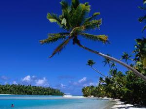 Palm Trees on Beach, Cook Islands by Jean-Bernard Carillet