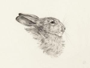 Head Of A Rabbit by Jean Bernard