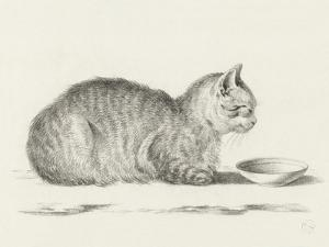 Lying Cat, Facing Right, By A Dish by Jean Bernard