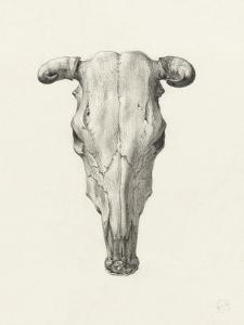 Skull Of A Cow, Seen From Above by Jean Bernard