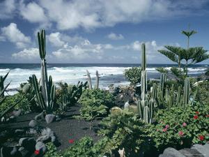 Garden by the Atlantic Ocean, El Golfo, Lanzarote, Canary Islands, Spain, Europe by Jean Brooks