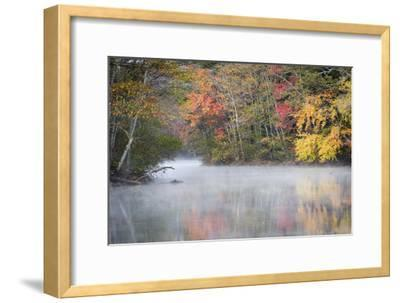 Morning mist and fall colours, River Pemigewasset, New Hampshire, New England, USA, North America
