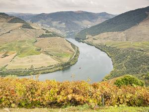 View over the River Duoro in autumn, Portugal, Europe by Jean Brooks