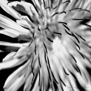 Contrastoflora III by Jean-Fran?ois Dupuis