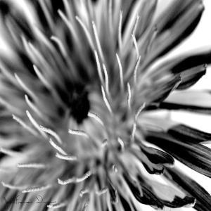 Contrastoflora IV by Jean-Fran?ois Dupuis