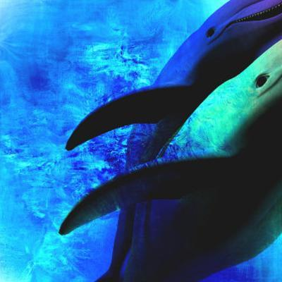 Dolphin I