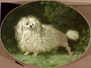 Portrait of a Poodle by Jean Jacques Bachelier