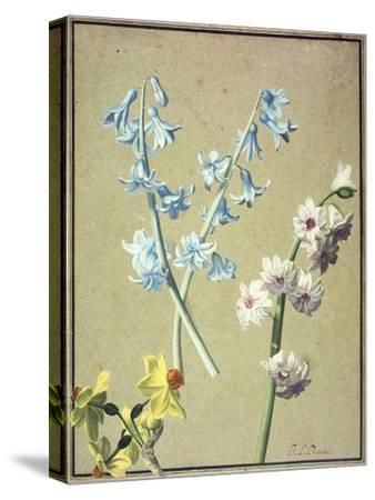 A Blue and a Lavender Hyacinth, and a Yellow Narcissus, C.1805