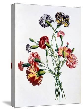 Bouquet of Carnations, from 'Collection Des Fleurs Et Des Fruits D'Apres Nature', Published 1805