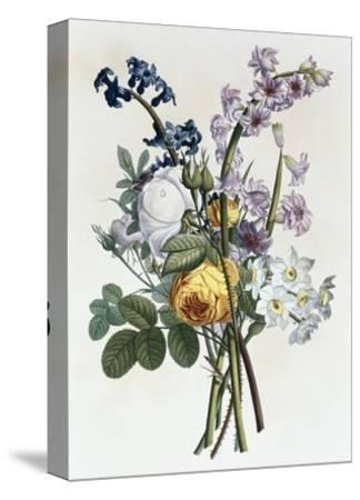 Bouquet of Rose, Narcissus and Hyacinth
