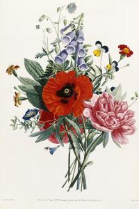 Collection Des Fleurs et Des Fruits, 1805 by Jean Louis Prevost