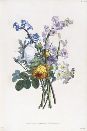 Narcissi, Rosa, Hyacynth, 1805