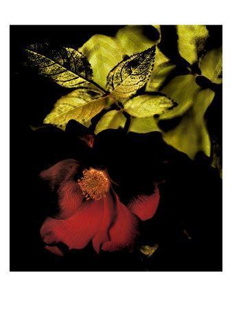 Night Bloom I