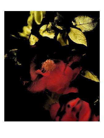 Night Bloom II