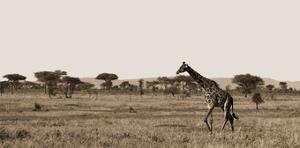 Serengeti Horizons II by Jeff/Boyce Maihara/Watt