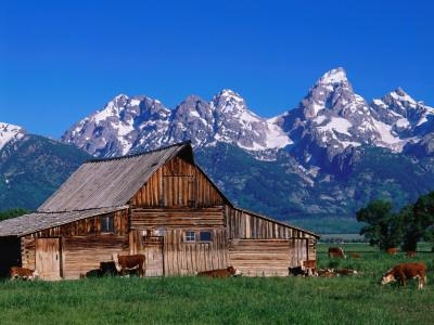 An Old Barn Sits in a Grassy Field Near the Mountains, as Cattle Graze Nearby