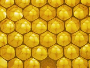 Backlit Honeycomb by Jeff Foott