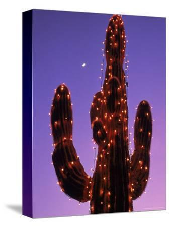 Lighted Wickenburg Cactus, AZ
