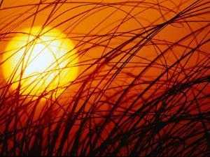 Sun Rising Through Grass, FL by Jeff Greenberg