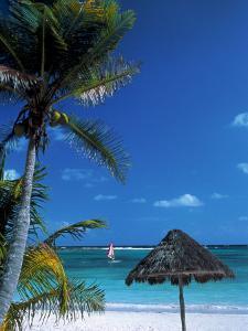 Tropical Beach by Jeff Greenberg