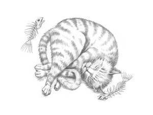 Cat Nap Pencil by Jeff Haynie