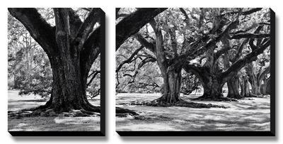 Majestic Oaks I by Jeff Maihara