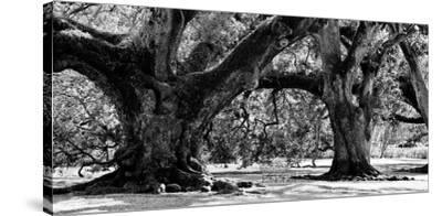 Majestic Oaks II by Jeff Maihara