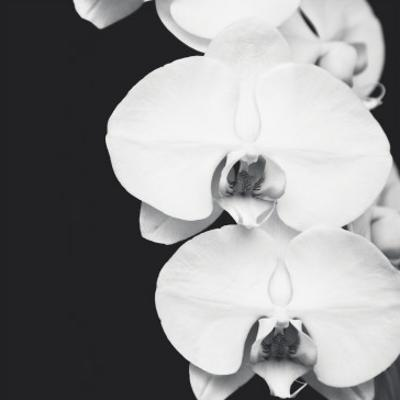 Orchid Portrait II by Jeff Maihara