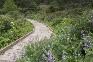 A Walkway Through Point Reyes National Seashore in Marin County, California by Jeff Mauritzen