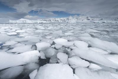 Sea Ice Floats in Fournier Bay, Antarctica by Jeff Mauritzen