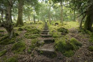 Steps Lead Up a Hill in Tomies Wood in Killarney National Park, County Kerry, Ireland by Jeff Mauritzen