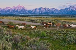 Horses Walk by Jeff R Clow