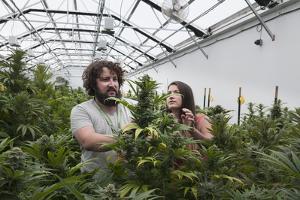 Man and Woman with Cannabis Plant in Organic Marijuana Farm, Pueblo, Colorado, USA, June 2015 by Jeff Rotman