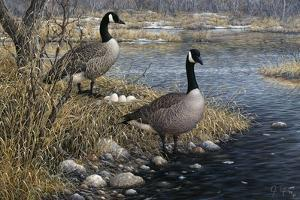 Canadian Pair by Jeff Tift