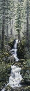 Cascade Wolves by Jeff Tift