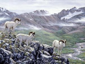 Dall Sheep at Denali by Jeff Tift