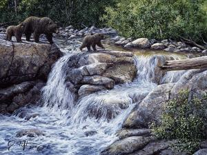 Entiat Falls-Grizzly Family by Jeff Tift
