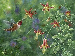 Rufous Hummingbird by Jeff Tift