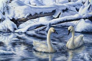 Tundra Swans by Jeff Tift